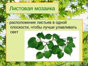 - расположение листьев в одной плоскости, чтобы лучше улавливать свет Листовая м