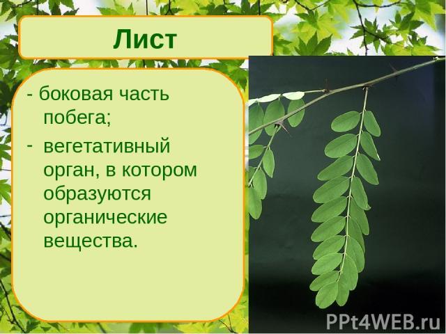 - боковая часть побега; вегетативный орган, в котором образуются органические вещества. Лист