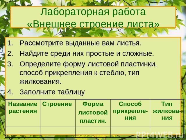 Лабораторная работа «Внешнее строение листа» Рассмотрите выданные вам листья. Найдите среди них простые и сложные. Определите форму листовой пластинки, способ прикрепления к стеблю, тип жилкования. Заполните таблицу Название растения Строение Форма …