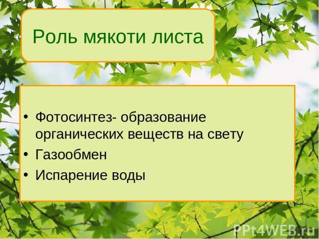 Фотосинтез- образование органических веществ на свету Газообмен Испарение воды Роль мякоти листа