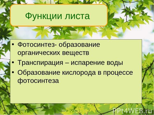 Фотосинтез- образование органических веществ Транспирация – испарение воды Образование кислорода в процессе фотосинтеза Функции листа