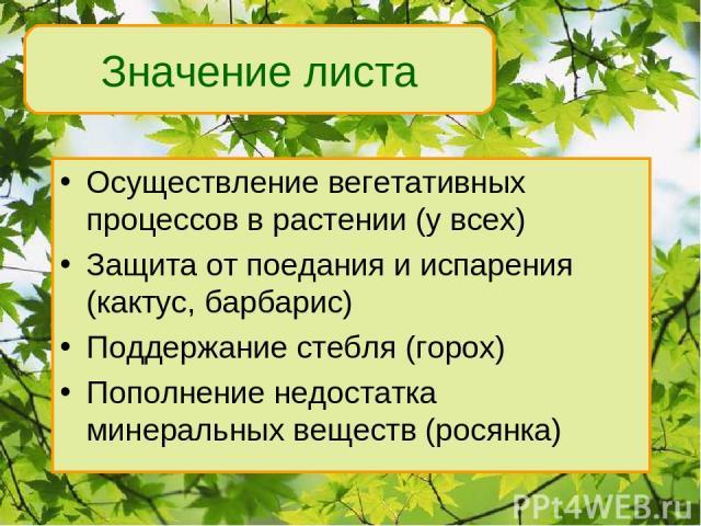 Осуществление вегетативных процессов в растении (у всех) Защита от поедания и испарения (кактус, барбарис) Поддержание стебля (горох) Пополнение недостатка минеральных веществ (росянка) Значение листа