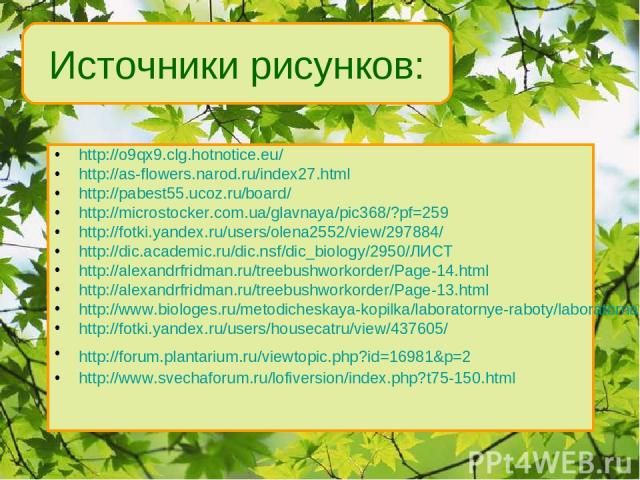 http://o9qx9.clg.hotnotice.eu/ http://as-flowers.narod.ru/index27.html http://pabest55.ucoz.ru/board/ http://microstocker.com.ua/glavnaya/pic368/?pf=259 http://fotki.yandex.ru/users/olena2552/view/297884/ http://dic.academic.ru/dic.nsf/dic_biology/2…