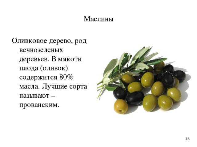 Маслины Оливковое дерево, род вечнозеленых деревьев. В мякоти плода (оливок) содержится 80% масла. Лучшие сорта называют – прованским. 16