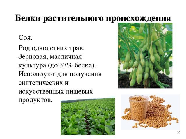 Белки растительного происхождения Соя. Род однолетних трав. Зерновая, масличная культура (до 37% белка). Используют для получения синтетических и искусственных пищевых продуктов. 10