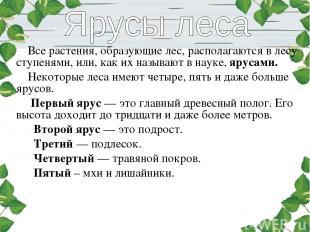 Все растения, образующие лес, располагаются в лесу ступенями, или, как их называ