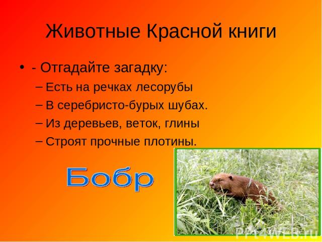 Животные Красной книги - Отгадайте загадку: Есть на речках лесорубы В серебристо-бурых шубах. Из деревьев, веток, глины Строят прочные плотины.
