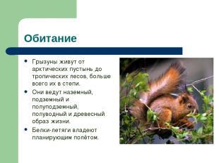 Обитание Грызуны живут от арктических пустынь до тропических лесов, больше всего