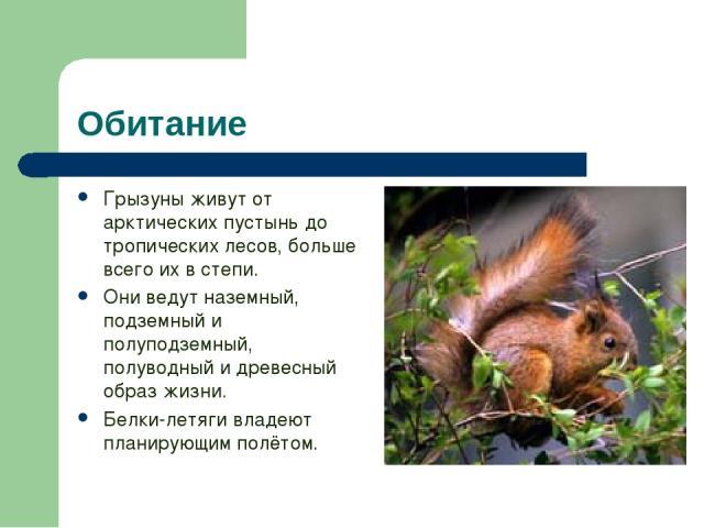 Обитание Грызуны живут от арктических пустынь до тропических лесов, больше всего их в степи. Они ведут наземный, подземный и полуподземный, полуводный и древесный образ жизни. Белки-летяги владеют планирующим полётом.