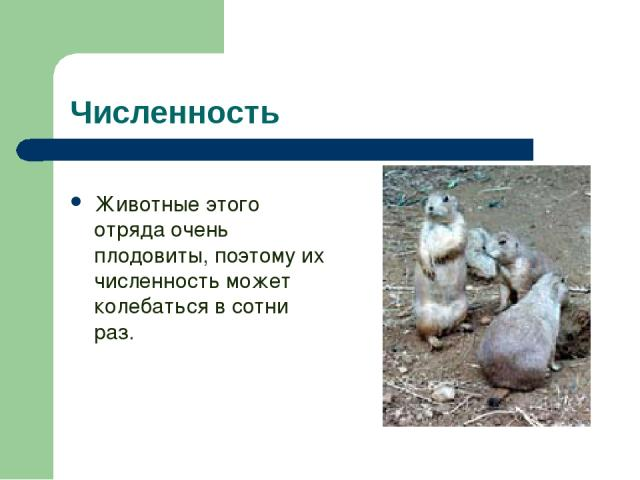 Численность Животные этого отряда очень плодовиты, поэтому их численность может колебаться в сотни раз.