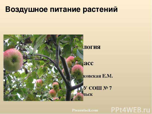 Воздушное питание растений Биология 6 класс Пеньковская Е.М. МБОУ СОШ № 7 г. Сальск Prezentacii.com