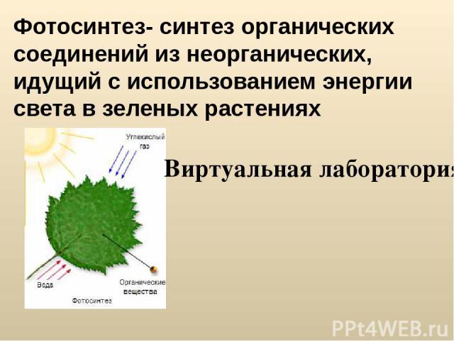 Фотосинтез- синтез органических соединений из неорганических, идущий с использованием энергии света в зеленых растениях Виртуальная лаборатория