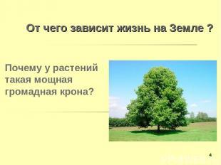 От чего зависит жизнь на Земле ? Почему у растений такая мощная громадная крона?