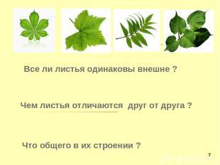 Все ли листья одинаковы внешне ? Чем листья отличаются друг от друга ? Что общег