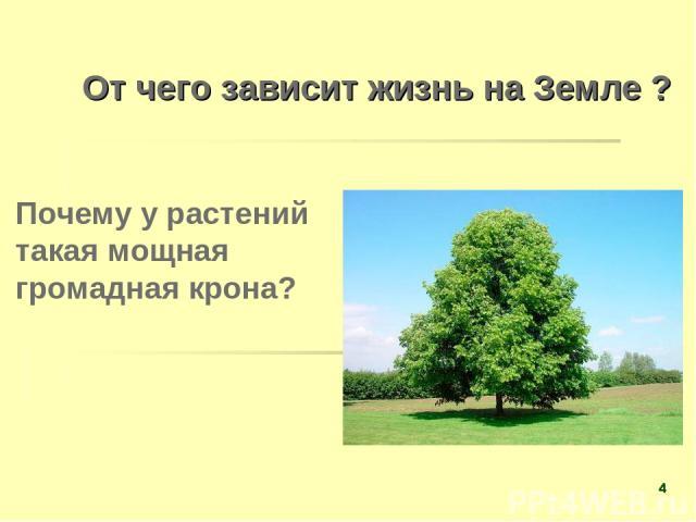 От чего зависит жизнь на Земле ? Почему у растений такая мощная громадная крона? *