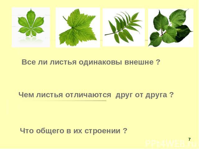 Все ли листья одинаковы внешне ? Чем листья отличаются друг от друга ? Что общего в их строении ? *