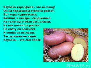Клубень картофеля - это не плод! Он на подземном столоне растёт. Вот кора и древ