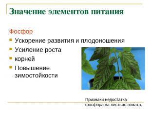 Значение элементов питания Фосфор Ускорение развития и плодоношения Усиление рос