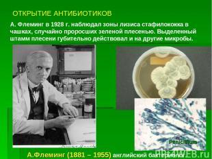 ОТКРЫТИЕ АНТИБИОТИКОВ А. Флеминг в 1928 г. наблюдал зоны лизиса стафилококка в ч