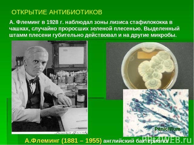 ОТКРЫТИЕ АНТИБИОТИКОВ А. Флеминг в 1928 г. наблюдал зоны лизиса стафилококка в чашках, случайно проросших зеленой плесенью. Выделенный штамм плесени губительно действовал и на другие микробы. А.Флеминг (1881 – 1955) английский бактериолог. Рenicillium