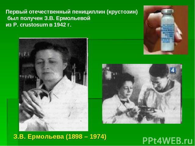 Первый отечественный пенициллин (крустозин) был получен З.В. Ермольевой из P. crustosum в 1942 г. З.В. Ермольева (1898 – 1974)