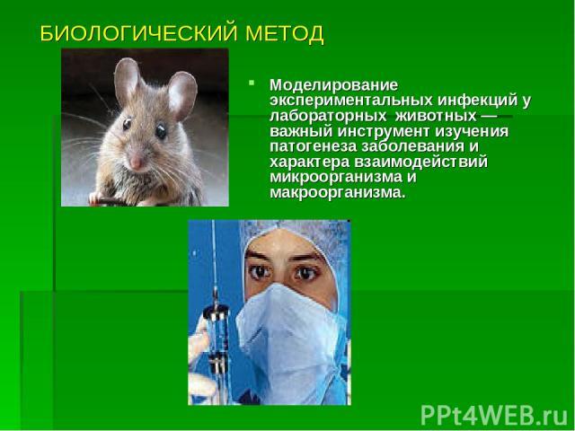 БИОЛОГИЧЕСКИЙ МЕТОД Моделирование экспериментальных инфекций у лабораторных животных — важный инструмент изучения патогенеза заболевания и характера взаимодействий микроорганизма и макроорганизма.
