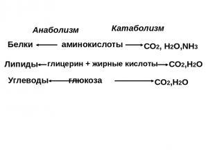 аминокислоты глицерин + жирные кислоты глюкоза Белки Липиды Углеводы СО2, Н2О,NH