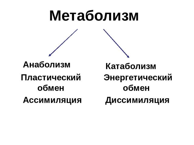 Метаболизм Пластический обмен Ассимиляция Анаболизм Энергетический обмен Диссимиляция Катаболизм