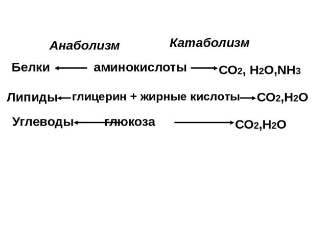 аминокислоты глицерин + жирные кислоты глюкоза Белки Липиды Углеводы СО2, Н2О,NH3 СО2,Н2О СО2,Н2О Анаболизм Катаболизм