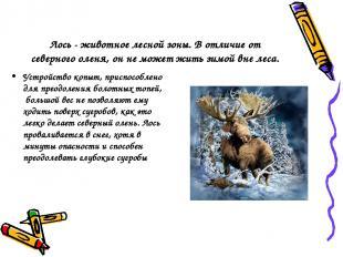 Лось - животное лесной зоны. В отличие от северного оленя, он не может жить зимо