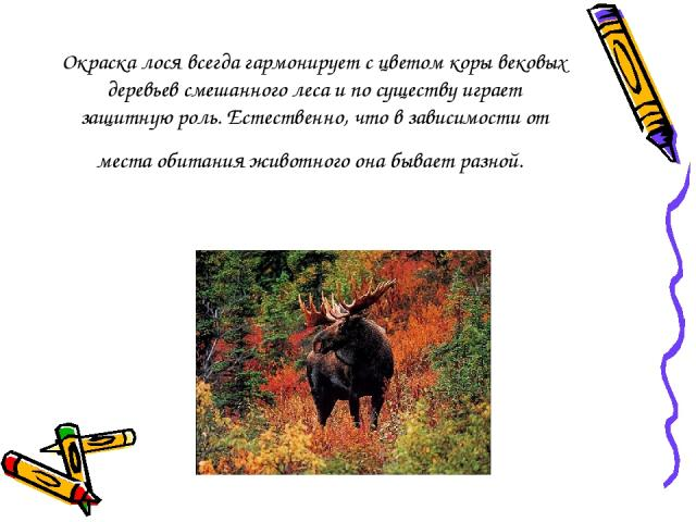 Окраска лося всегда гармонирует с цветом коры вековых деревьев смешанного леса и по существу играет защитную роль. Естественно, что в зависимости от места обитания животного она бывает разной.