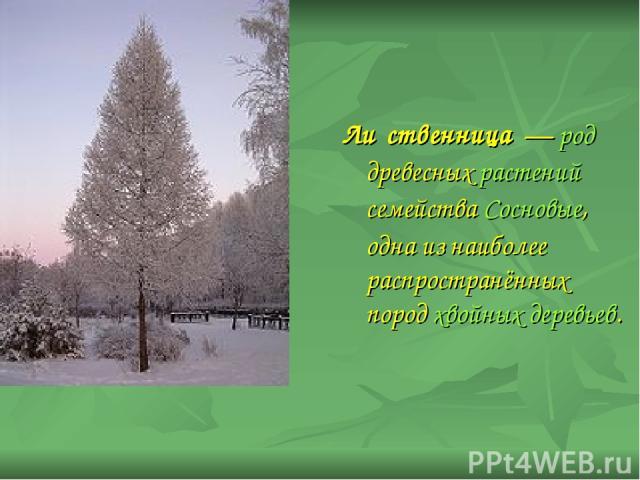 Ли ственница — род древесных растений семейства Сосновые, одна из наиболее распространённых пород хвойных деревьев.