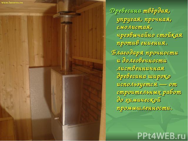 Древесина твёрдая, упругая, прочная, смолистая, чрезвычайно стойкая против гниения. Благодаря прочности и долговечности лиственничная древесина широко используется — от строительных работ до химической промышленности.