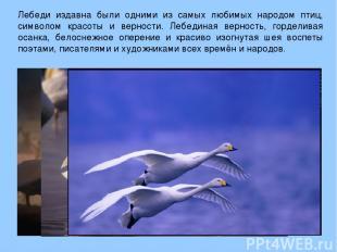 Лебеди издавна были одними из самых любимых народом птиц, символом красоты и вер