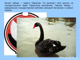 Белый лебедь – символ Удмуртии. Он раскинул свои крылья на государственном гербе