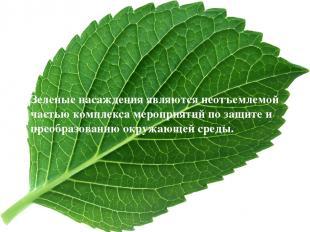 Зеленые насаждения являются неотъемлемой частью комплекса мероприятий по защите