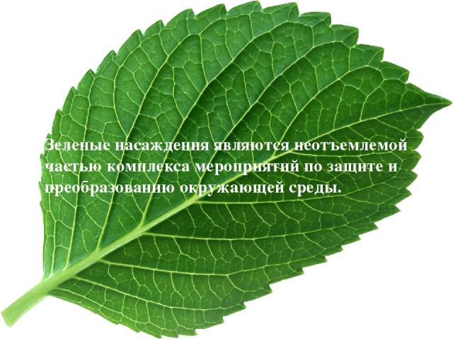 Зеленые насаждения являются неотъемлемой частью комплекса мероприятий по защите и преобразованию окружающей среды.
