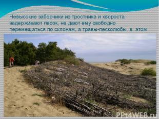 Невысокие заборчики из тростника и хвороста задерживают песок, не дают ему свобо