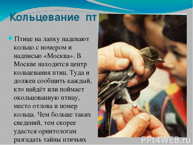 Кольцевание птиц Птице на лапку надевают кольцо с номером и надписью «Москва». В Москве находится центр кольцевания птиц. Туда и должен сообщить каждый, кто найдёт или поймает окольцованную птицу, место отлова и номер кольца. Чем больше таких сведен…