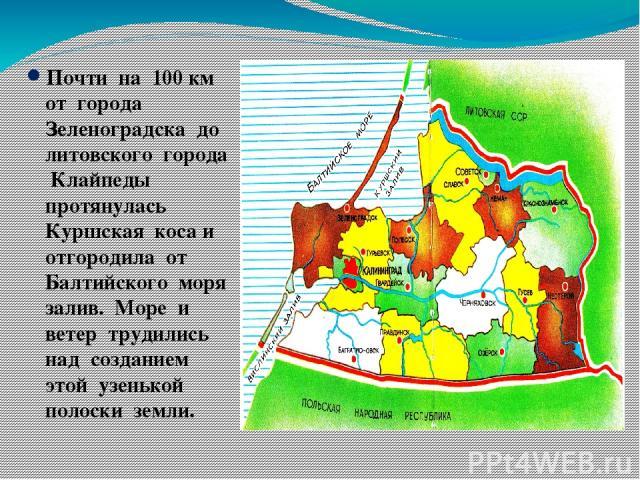 Почти на 100 км от города Зеленоградска до литовского города Клайпеды протянулась Куршская коса и отгородила от Балтийского моря залив. Море и ветер трудились над созданием этой узенькой полоски земли.