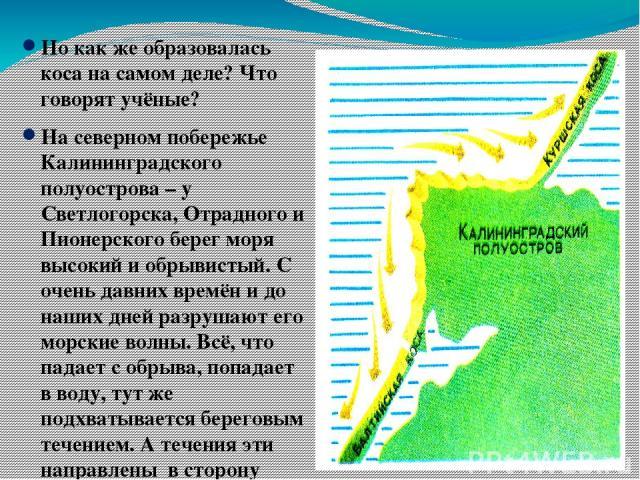 Но как же образовалась коса на самом деле? Что говорят учёные? На северном побережье Калининградского полуострова – у Светлогорска, Отрадного и Пионерского берег моря высокий и обрывистый. С очень давних времён и до наших дней разрушают его морские …