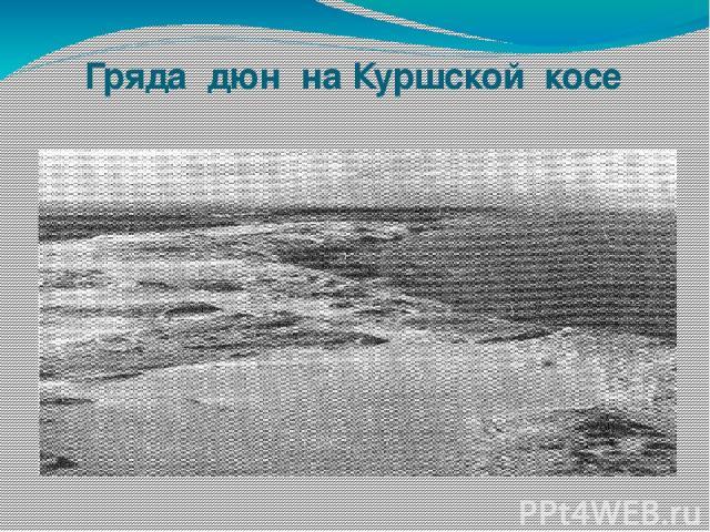 Гряда дюн на Куршской косе