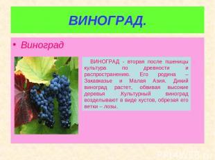 ВИНОГРАД. Виноград ВИНОГРАД - вторая после пшеницы культура по древности и распр