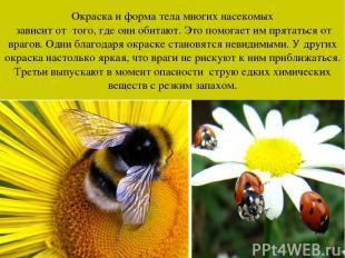 Окраска и форма тела многих насекомых зависит от того, где они обитают. Это помо