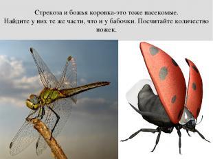 Стрекоза и божья коровка-это тоже насекомые. Найдите у них те же части, что и у