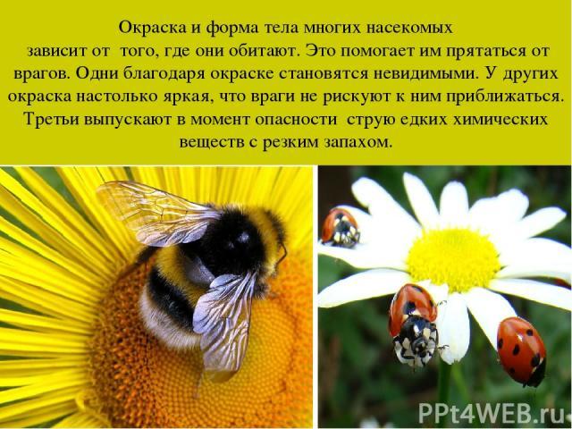 Окраска и форма тела многих насекомых зависит от того, где они обитают. Это помогает им прятаться от врагов. Одни благодаря окраске становятся невидимыми. У других окраска настолько яркая, что враги не рискуют к ним приближаться. Третьи выпускают в …