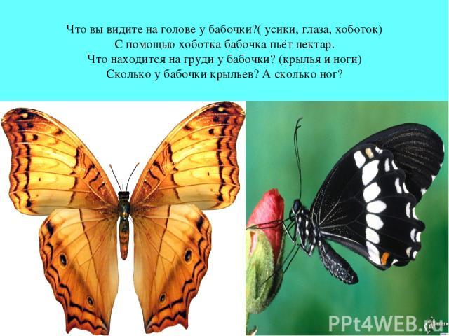 Что вы видите на голове у бабочки?( усики, глаза, хоботок) С помощью хоботка бабочка пьёт нектар. Что находится на груди у бабочки? (крылья и ноги) Сколько у бабочки крыльев? А сколько ног?