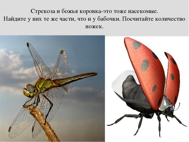 Стрекоза и божья коровка-это тоже насекомые. Найдите у них те же части, что и у бабочки. Посчитайте количество ножек.
