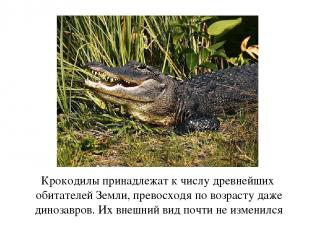 Крокодилы принадлежат к числу древнейших обитателей Земли, превосходя по возраст