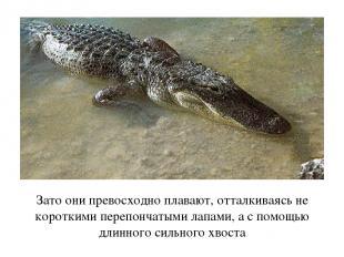 Зато они превосходно плавают, отталкиваясь не короткими перепончатыми лапами, а